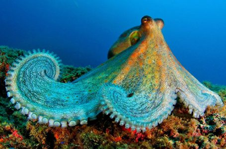 How Climate Change is affecting the Marine Life?
